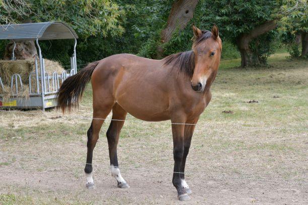 un cheval qui ne demande que des carresses