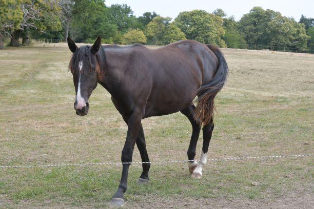 un autre cheval